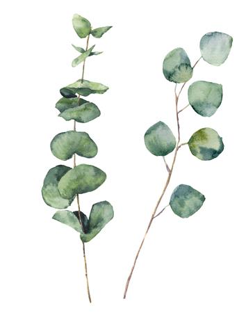 水彩ユーカリ丸葉し、枝します。手描きの赤ちゃんのユーカリや銀のドルの要素。花のイラストは、白い背景で隔離。設計、織物および背景 写真素材