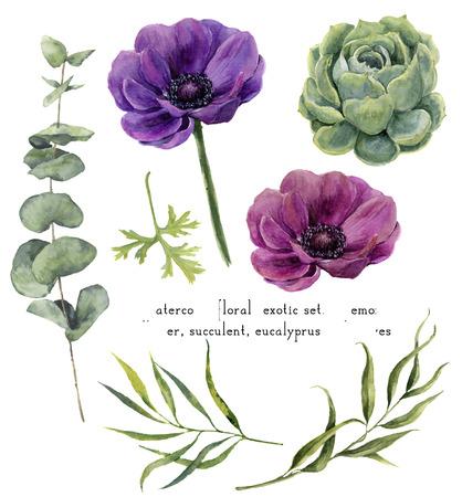 Waterverf het exotische bloemen elementen instellen. Vintage bladeren, eucalyptus, sappig en anemoon bloemen op een witte achtergrond. Hand getrokken botanische illustratie voor ontwerp, achtergrond, stof Stockfoto - 65144983