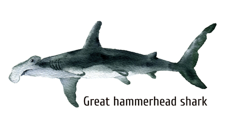 hammerhead: Watercolor Great hammerhead shark. Illustration isolated on white background. For design, prints, background, t-shirt.