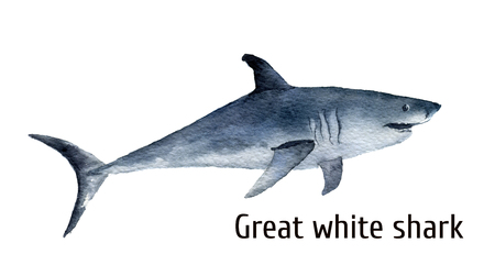 Watercolor great white shark. White death shark isolated on white background. For design, prints, background, t-shirt.