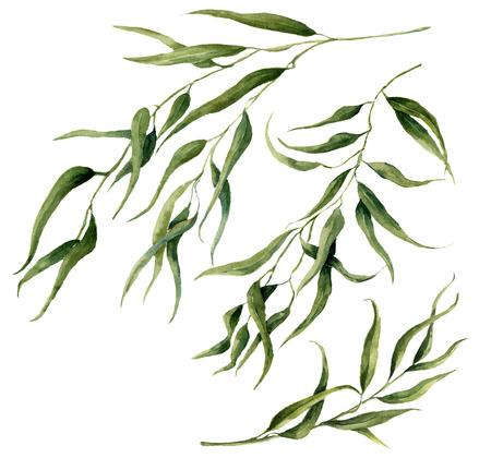 수채화 유칼립투스 분기 설정 나뭇잎. 손으로 그린 꽃 요소입니다. 흰색 배경에 그림입니다. 디자인, 섬유 및 배경