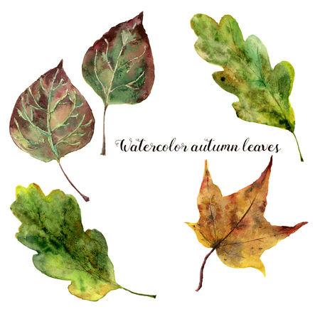 Watercolor autumn leaves set. Hand painted fall leaves isolated on white background. Botanical illustration for design.
