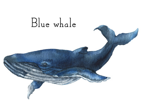 Watercolor blue whale. Illustration isolated on white background. For design, prints or background.