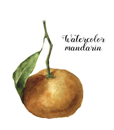 mandarins: Watercolor mandarin with leaf. Hand painted orange citrus food illustration isolated on white background. Fruit print for design.