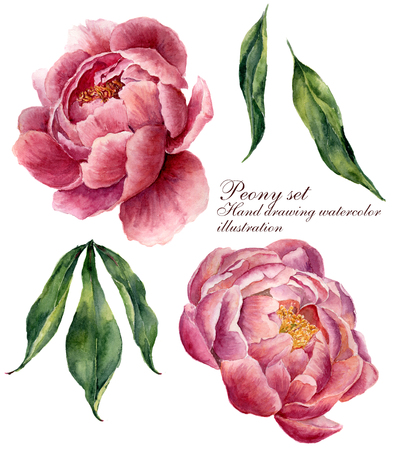 Watercolor floral elements set. Vintage leaves and peony flowers isolated on white background. Hand drawn botanical illustration for your design.