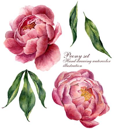 Set di elementi floreali dell'acquerello. Foglie d'epoca e fiori di peonia isolati su sfondo bianco. Illustrazione botanica disegnata a mano per il vostro disegno. Archivio Fotografico - 65145257