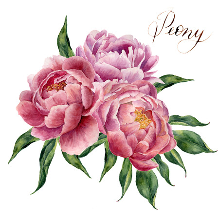 Watercolor peonies bouquet isolated on white background. Hand painted peony flowers and green leaves. Floral illustration for your design, background or print