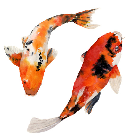 水彩東洋虹鯉セットです。Koi の魚は、白い背景で隔離。デザイン、背景布を水中の図。