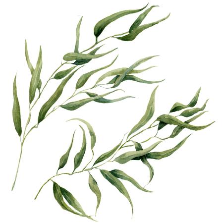 Waterverf verlaat takset. Handgeschilderde eucalyptuselementen. Illustratie geïsoleerd op een witte achtergrond. Voor ontwerp, textiel en achtergrond