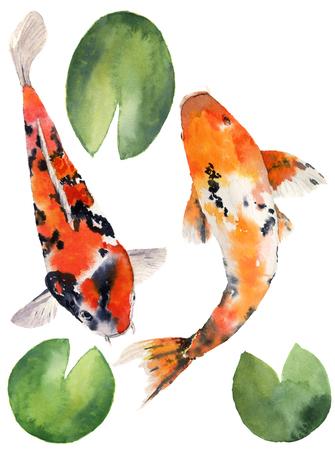 Acuarela carpa arco iris oriental con hojas de lirio de agua establecido. Pescados de Koi aislados en el fondo blanco. Ilustración subacuática para el diseño, el fondo o la tela. Foto de archivo - 65144680