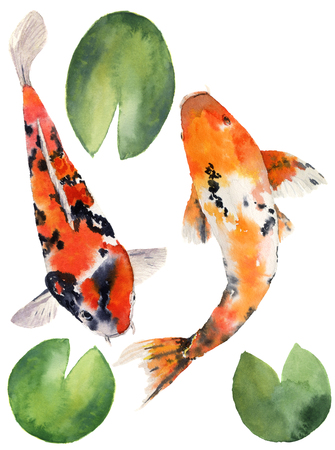 Watercolor oriental rainbow carp with water lily leaves set. Koi fishes isolated on white background. Underwater illustration for design, background or fabric. Banco de Imagens - 65144680