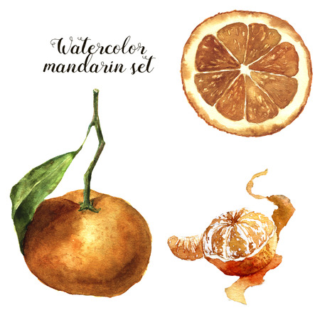 mandarin: Watercolor mandarin set. Citrus collection on white background for design, fabric or print Stock Photo