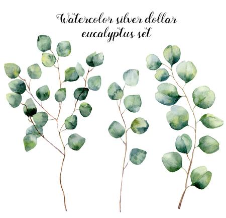 水彩のシルバー ダラー ユーカリ セット。手描きの円形の葉と花のイラスト、白い背景で隔離の枝。デザイン、プリント、生地の 写真素材