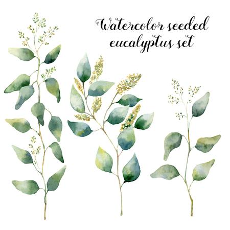 水彩はシード ユーカリ セットです。手描きの銀葉と白い背景で隔離の枝と花のイラスト。デザイン、印刷、繊維の
