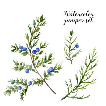 水彩ジュニパー セット。手描きの白い背景の上の果実と常緑の枝。デザインや印刷の植物の図。