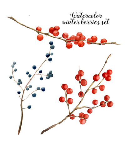 viburnum: Watercolor winter berries set. Hand painted red and blue winter berries and branches on white background. Botanical illustration for design or print.