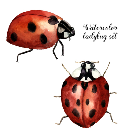 Watercolor ladybug set. Collection with ladybird. Insect illustration isolated on white background. For design or print