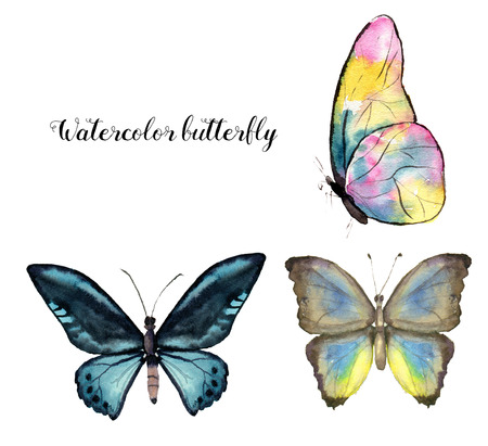 Watercolor butterfly. Hand painted insect collection isolated on white background. Illustration for design, print.