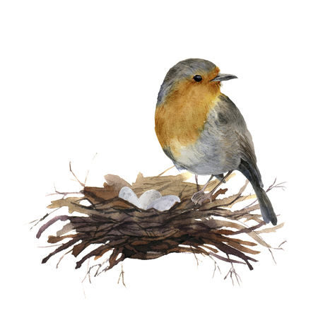 Watercolor bird sitting on nest with eggs. Hand painted illustration with robin isolated on white background. Nature print for design. Stock Photo