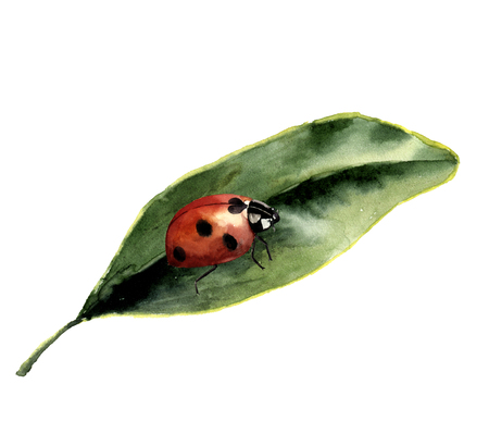 greenery: Watercolor ladybug with leaf. Nature card with ladybird. Insect illustration isolated on white background. For design or print