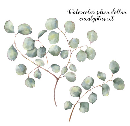 Watercolor silver dollar eucalyptus set. Hand painted floral illustration with round leaves and branches isolated on white background. For design, print and fabric Reklamní fotografie