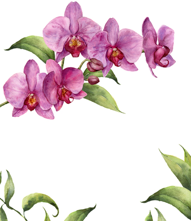 Watercolor floral card with orchids and leaves. Hand painted floral botanical illustration isolated on white background. For design or print.