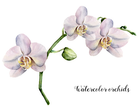 Watercolor branch with  white orchids. Hand painted floral botanical illustration isolated on white background. For design or print. Stock Photo