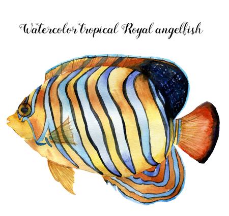 水彩ニシキヤッコ。手描きの白い背景に分離された熱帯の魚。デザイン、ファブリックまたは印刷用の水中動物イラスト。