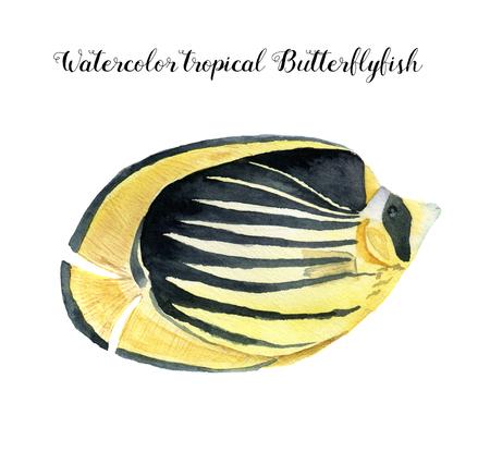 水彩チョウチョウウオ科。手描きの白い背景に分離された熱帯の魚。デザイン、ファブリックまたは印刷用の水中動物イラスト。