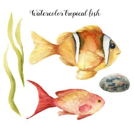 水彩熱帯魚。塗られたキンギョハナダイ、クマノミ、海藻、石に孤立した白い背景の手。デザイン、ファブリックまたは印刷用の水中動物イラスト 写真素材