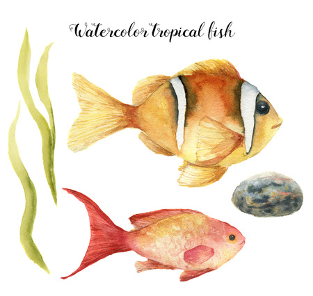 Watercolor tropical fish. Hand painted Sea goldie and Clownfish, seaweed, stone isolated on white background. Underwater animal illustration for design, fabric or print.
