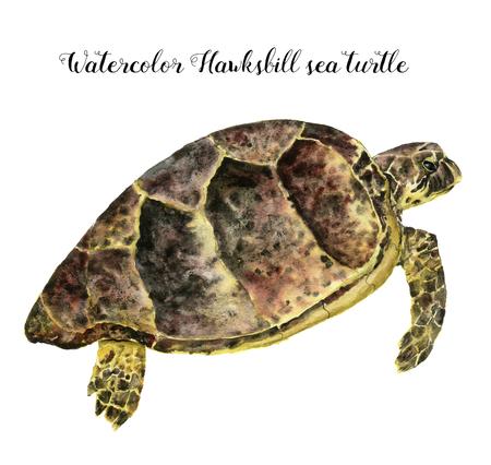 수채화 Hawksbill 바다 빛 거북입니다. 손으로 그린 수 중 동물 그림 흰색 배경에 고립. 디자인, 직물 또는 인쇄용.