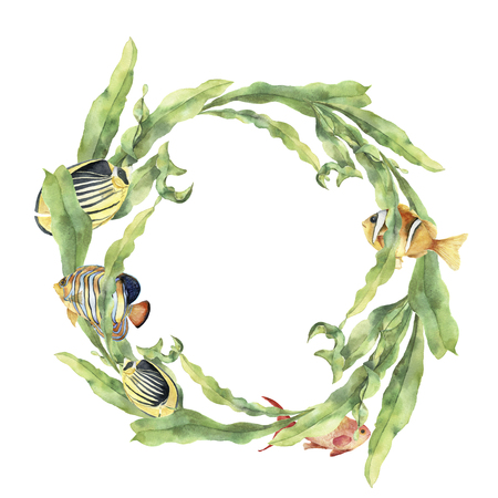 Watercolor sea wreath with laminaria and tropical fish. Hand painted underwater floral illustration with algae leaves branch and animals isolated on white background. Ocean print
