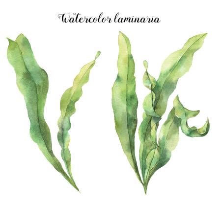 수채화 물벼룩. 손으로 그린 해 조류와 수 중 꽃 그림 흰색 배경에 고립 된 분기 나뭇잎. 디자인, 직물 또는 인쇄용.
