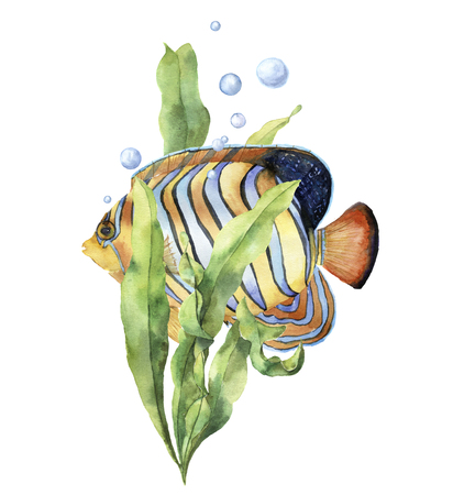 Watercolor aquarium card with fish. Hand painted underwater print with angelfish, laminaria branch and air bubbles isolated on white background. Illustration for design, print or background Stock Photo