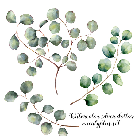 Watercolor set with silver dollar eucalyptus. Hand painted floral illustration with round leaves and branches isolatedon white background. For design, print and fabric