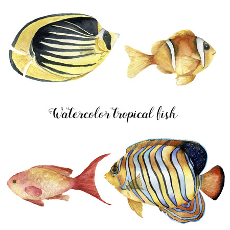 Watercolor tropical fish set. Hand painted Royal angelfish, Butterflyfish, Sea goldie and Clownfish isolated on white background. Underwater animal illustration for design, fabric or print.