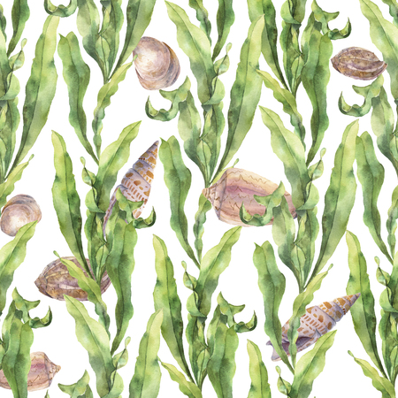agar: Watercolor seamless pattern with laminaria and seashells. Hand painted underwater floral illustration with algae leaves branch isolated on white background. For design, fabric or print.