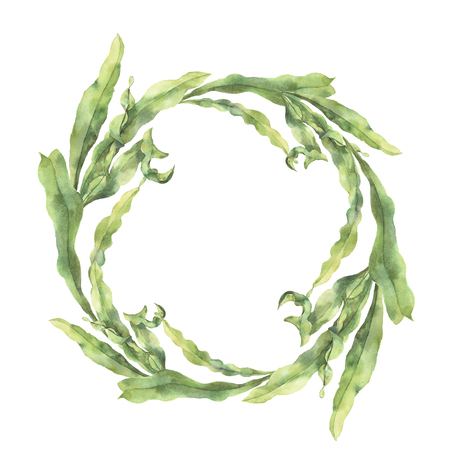 Watercolor wreath with laminaria. Hand painted underwater floral illustration with algae leaves branch isolated on white background. For design, fabric or print. Stock Photo