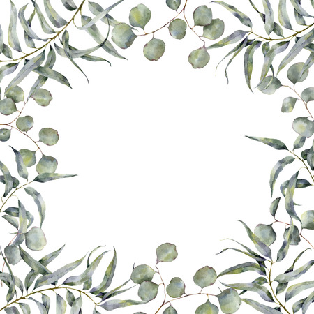 gum tree: Watercolor border with eucalyptus branch. Hand painted floral frame with round leaves of silver dollar eucalyptus isolated on white background. For design or print