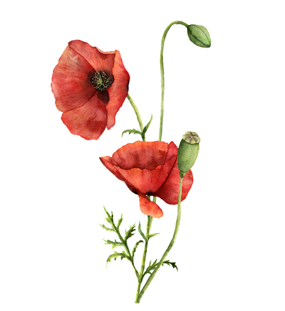 Watercolor poppies bouquet. Hand painted floral illustration with leaves, seed capsule and branches isolated on white background. For design, print and fabric Banco de Imagens - 77959322