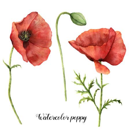 Aquarel klaprozen instellen. Handgeschilderde bloemen illustratie met bladeren, zaad capsule en takken geïsoleerd op een witte achtergrond. Voor ontwerp, print en stof