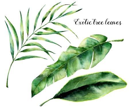 Watercolor set with exotic tree leaves. Hand painted palm branch and leaf of magnolia. Tropic plant isolated on white background. Botanical illustration. For design, print or background Imagens