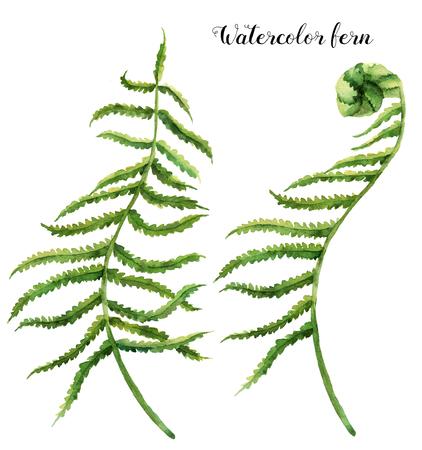 Aquarell mit Farnblättern eingestellt. Handgemalte Blumenillustration mit Farnzweig. Tropische Pflanze isoliert auf weißem Hintergrund. Botanische Illustration. Für Design, Druck oder Hintergrund Standard-Bild - 78333711