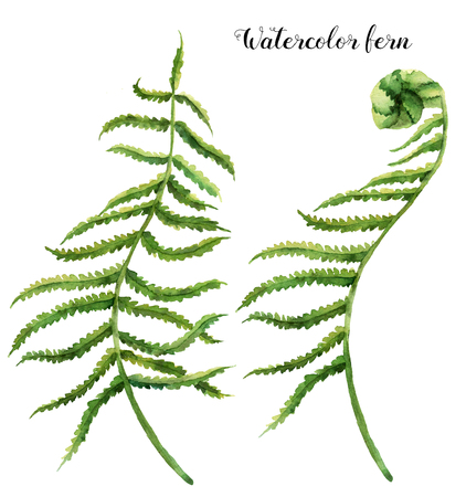 Watercolor set with fern leaves. Hand painted floral illustration with fern branch. Tropic plant isolated on white background. Botanical illustration. For design, print or background