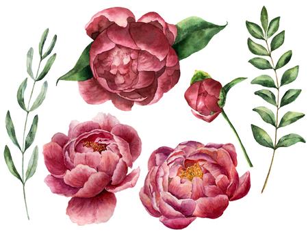 水彩花牡丹と緑に設定します。手描きの花の葉、ユーカリやローズマリーは、白い背景で隔離の支店。植物イラスト デザイン。
