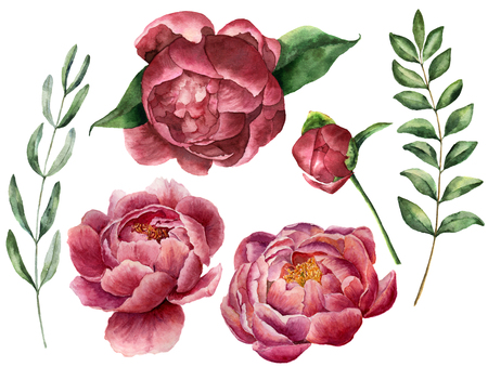 Watercolor floral set with peony and greenery. Hand painted flowers with leaves, branch of eucalyptus and rosemary isolated on white background. Botanical illustration for design. Archivio Fotografico