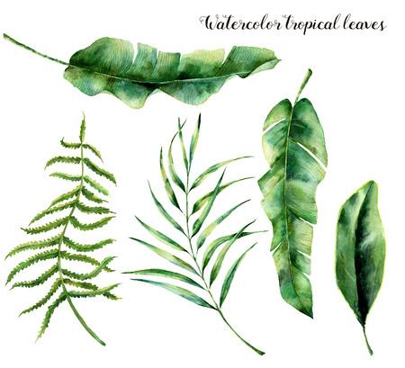 수채화 열 대 잎을 사용 하여 설정합니다. 손으로 팜 분기, 펀 및 목련 잎을 그린. 트로픽 공장 흰색 배경에 고립입니다. 식물 그림입니다. 디자인, 인쇄