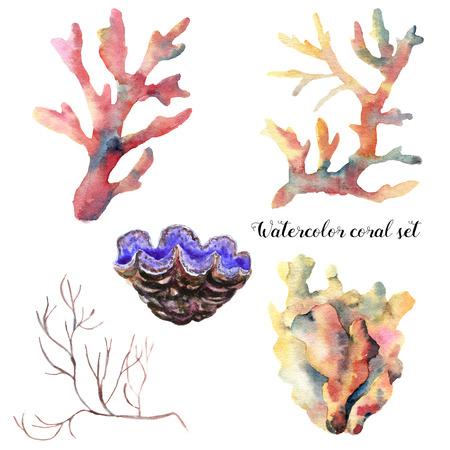 Conjunto de aquarela com ramo de coral. Animal subaquático pintado à mão isolado no fundo branco. Ilustração da vida marinha tropical. Para design, impressão ou plano de fundo. Foto de archivo - 80057876