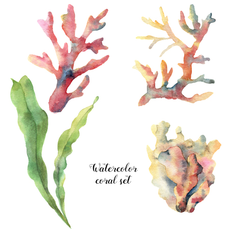 Watercolor set with coral and laminaria. Hand painted underwater branches isolated on white background. Tropical sea life illustration. For design, print or background.